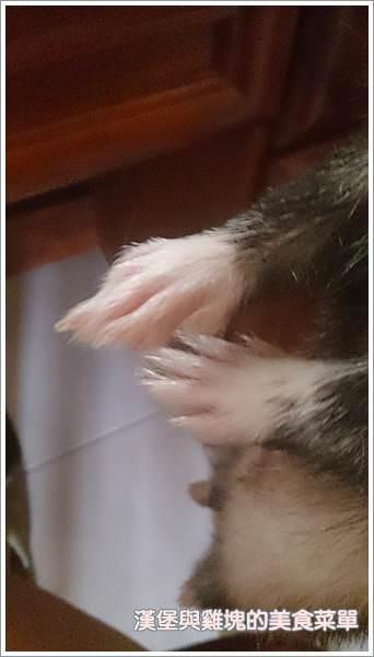 【寵物貂】毛孩子成長日記-如何照顧貂? - nurseilife.cc