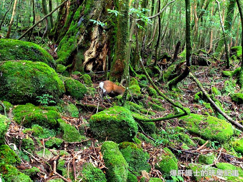 日本必去景點!宮崎駿魔法森林、世界自然景觀遺產屋久島繩文杉! - nurseilife.cc