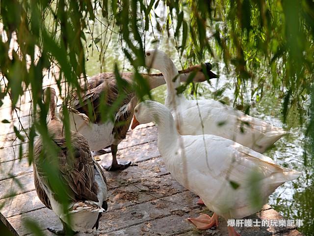 【彰化】華侖濕地公園 二林社區的桃花源 - nurseilife.cc