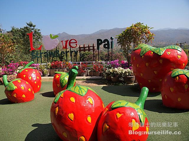 【擺鎮\拜城\pai】Love Strawberry Pai เลิฟสตรอเบอร์ - nurseilife.cc