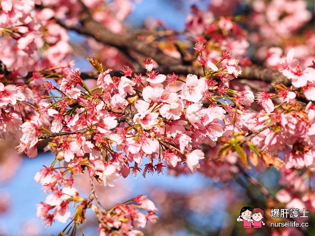 春遊名古屋 賞櫻名所名古屋城 - nurseilife.cc