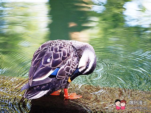 【日本金澤】 榮獲米其林觀光旅遊指南評選為三星級 必訪的日本三大名園之一 金澤兼六園 - nurseilife.cc