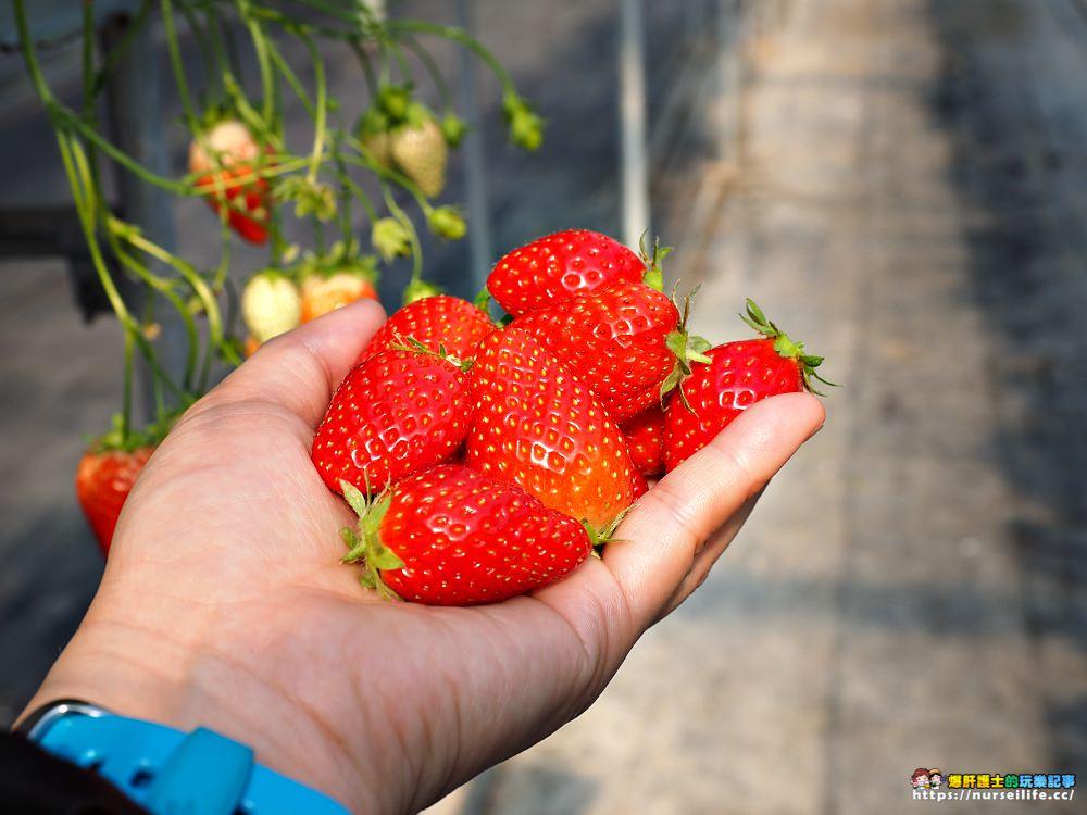 日本、三重|こうちく男爵草莓園.採草莓吃到飽體驗 - nurseilife.cc