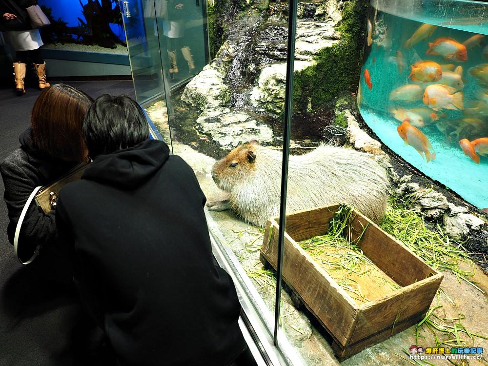 日本、三重|鳥羽水族館.美人魚餵食秀超療癒 - nurseilife.cc
