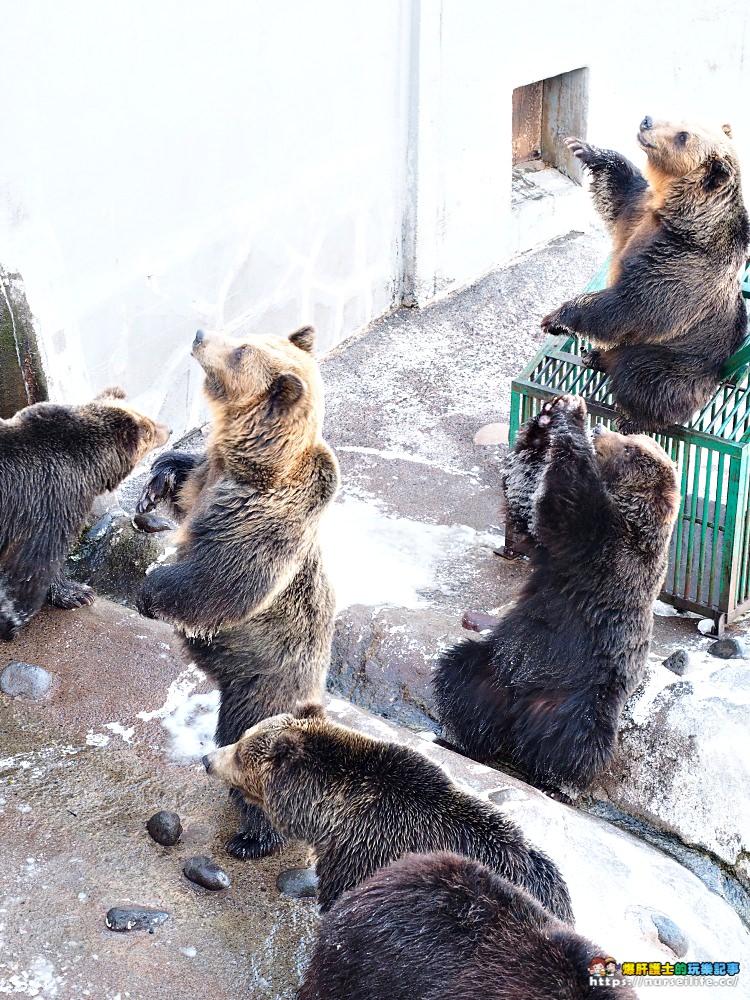 北海道 登別熊牧場.熊出沒注意 - nurseilife.cc