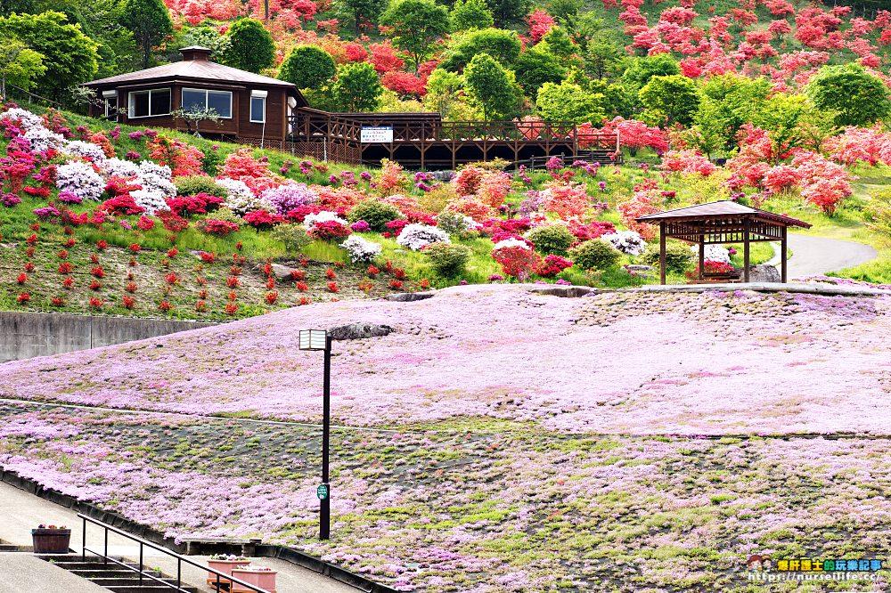 福島|平田村芝櫻.滿山杜鵑芝櫻的萬紫千紅 - nurseilife.cc