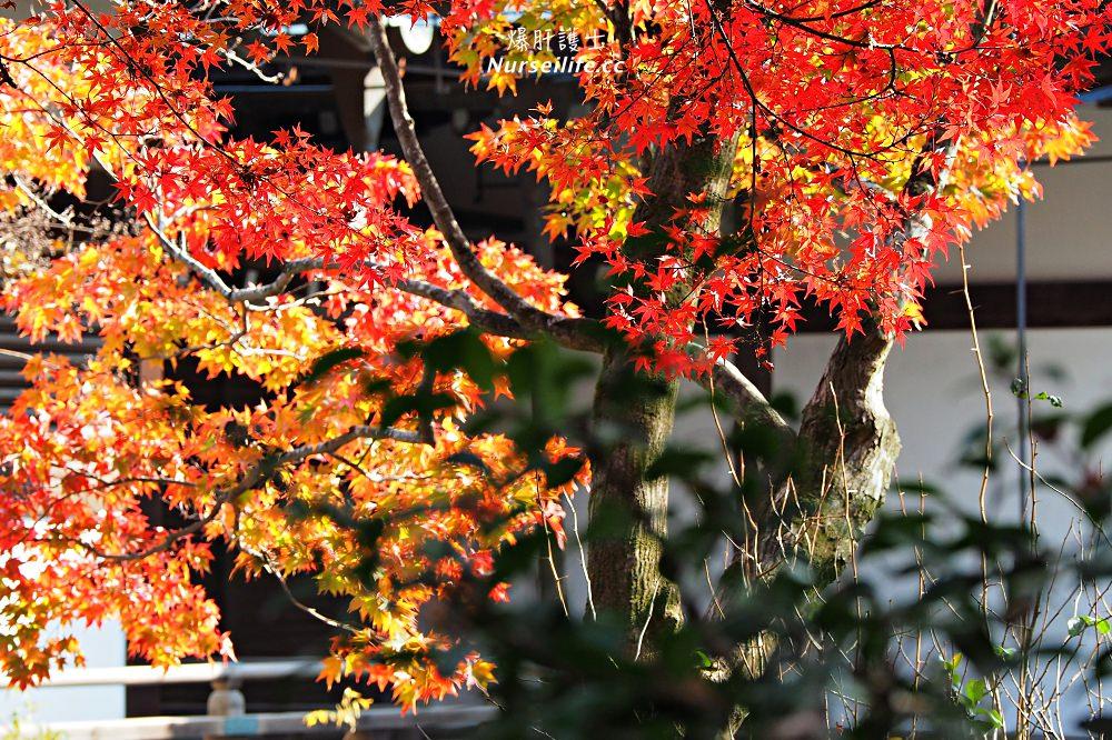 京都|嵐山楓葉季限定.京馬車、保津川遊船、漫步天龍寺、美足按摩 - nurseilife.cc