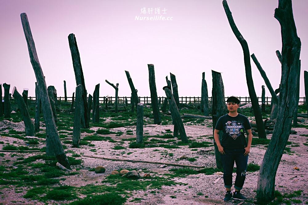 彰化、福興 福寶濕地.漂流木公園.看夕陽挖蛤的IG打卡點 - nurseilife.cc