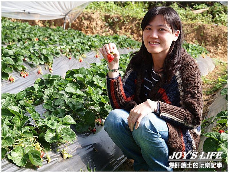 【苗栗 大湖】湖丘有機草莓園 有緣才吃得到的無毒草莓 - nurseilife.cc