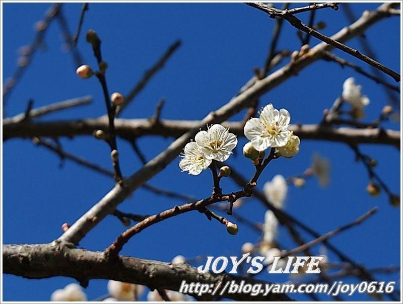 【南投】春風吹雪,牛稠坑野餐賞梅去~ - nurseilife.cc