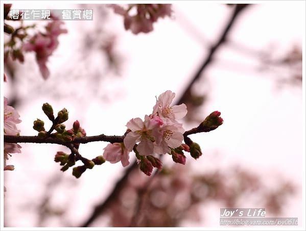 【天元宮賞櫻】櫻花乍現  三月瘋賞櫻 - nurseilife.cc