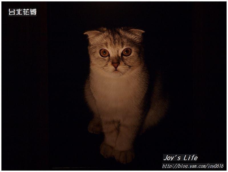 【台北】台北花博─天使生活館│來學貓的生活態度 - nurseilife.cc